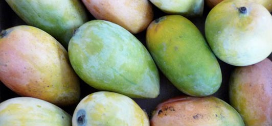 "Christine Ellinger reports, ""In the beginning, we didn't know what quantity of fruit was necessary to produce the amount of organic mango butter we required."""