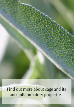 Find out more about sage and its anti-inflammatory properties.